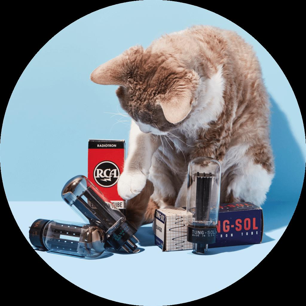 Cats & Tubes | Fuzz Audio